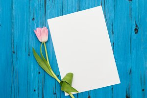 pink tulip on a blue wooden board