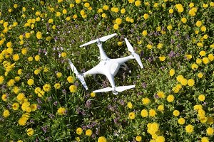Quadrocopter DJI Phantom 4 is on a clearing with dandelion flowers.