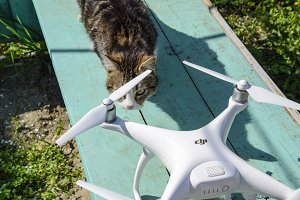 The cat sniffs the drone DJI phantom 4. Surprise the animal with a new gadget. Quadrocopter and pet. Cat and drone.