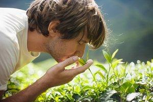 Man on Tea Plantation