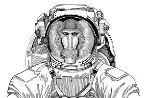 Monkey, baboon, dog-ape, ape wearing space suit Wild animal astronaut Spaceman Galaxy exploration Hand drawn illustration for t-shirt