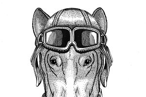 DOG for t-shirt design wearing leather helmet Aviator, biker, motorcycle Hand drawn illustration for tattoo, emblem, badge, logo, patch