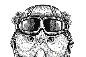 Portrait of fluffy persian cat wearing leather helmet Aviator, biker, motorcycle Hand drawn illustration for tattoo, emblem, badge, logo, patch