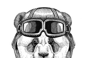 Panda bear, bamboo bear wearing leather helmet Aviator, biker, motorcycle Hand drawn illustration for tattoo, emblem, badge, logo, patch