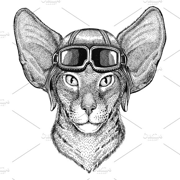 Oriental Cat With Big Ears Wearing Leather Helmet Aviator Biker Motorcycle Hand Drawn Illustration For Tattoo Emblem Badge Logo Patch