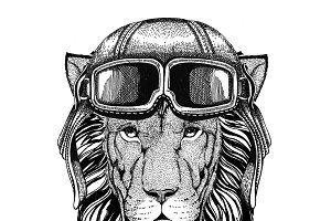 Wild Lion wearing leather helmet Aviator, biker, motorcycle Hand drawn illustration for tattoo, emblem, badge, logo, patch