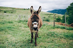Cute little donkey