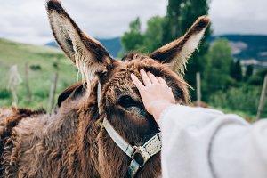 Woman petting a donkey