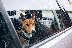 Sad little puppy in a car