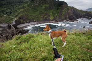 POV of puppy owner and dog on leash