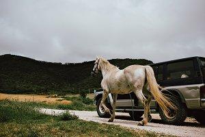 Man transports wild horse