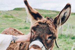 Cute donkey on farm