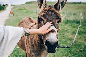 Woman pets cute donkey