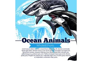 Killer whale or orca and shark fish vector poster