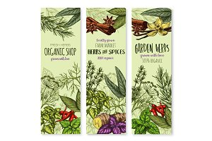 Vector banners of spices and herbs for shop