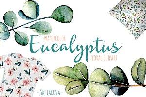 Eucalyptus watercolor clipart