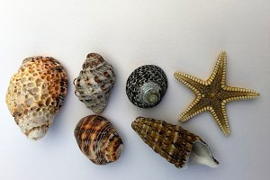 Small seashells and starfish