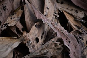 Abstract Dried Leaf