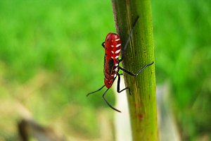 Red beetle on plant