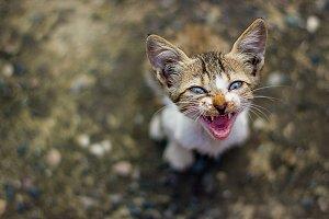 Cat talking