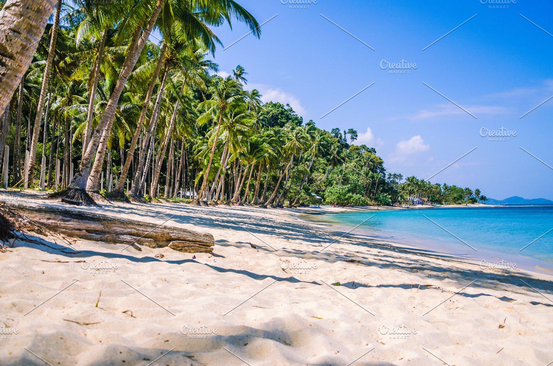 Sandy Beach With Palm Trees El Nido Palawan Philippines