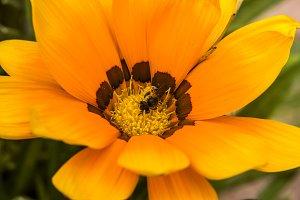 Beautiful flower closeup
