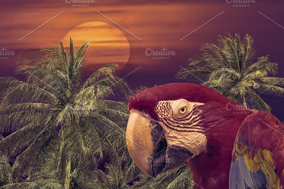 Tropical Background Collage Design