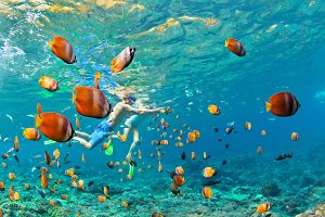 Snorkelling with tropical fishes