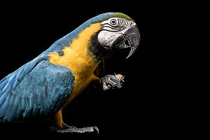 Macaw Parrot with Penut