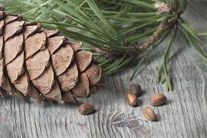 Cedar cone, nuts and needles