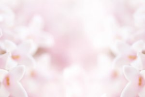 Macro Closeup Beauty Flowers Pink