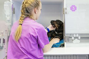 Veterinarian doctor hugging a dog.