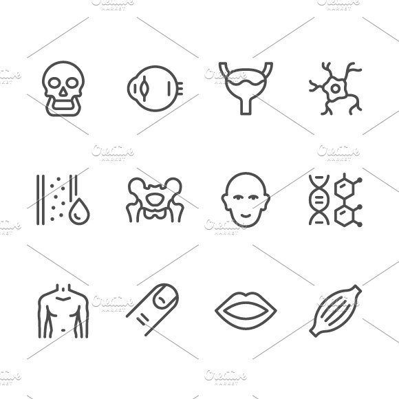 Set Line Icons Of Human Organs