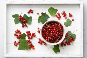Red currant bowl in a white tray