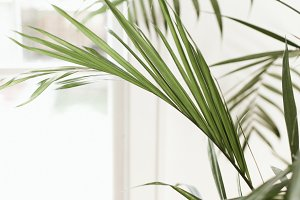 Palm No. 2