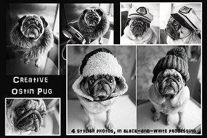 Creative Pug