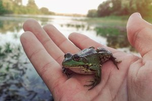 Little frog sitting on the hand