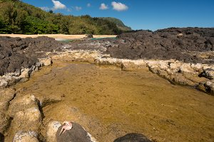 Lumahai Beach Kauai with rocks and crab