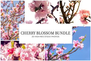 Cherry Blossom Stock Bundle
