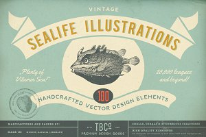 100 Vintage Sealife Illustrations