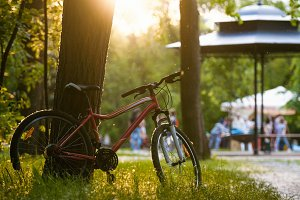 A bicycle stands near a tree in the summer park at sunset