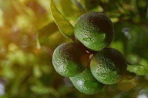 Macro of lemons