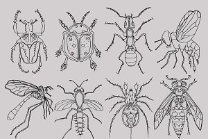 Bugs Insects Clipart