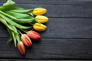 Flower background for a card to the International Women's Day or victory day on 9 may. Tulips on a black wooden background