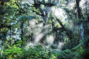 refraction of light.jpg