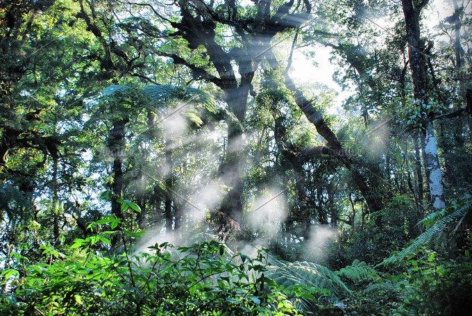 refraction of light.jpg - Nature