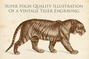 Vintage Tiger Engraving