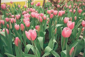Romantic Flower Field