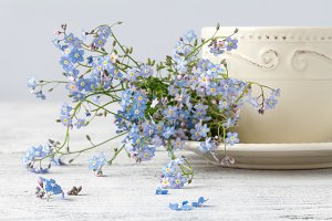 Cup of tea and forget me not flowers