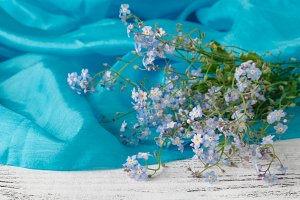 Beautiful forget me not